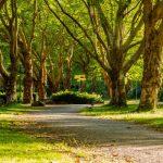 miller-grove-park